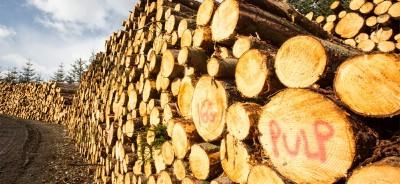 pulp wood